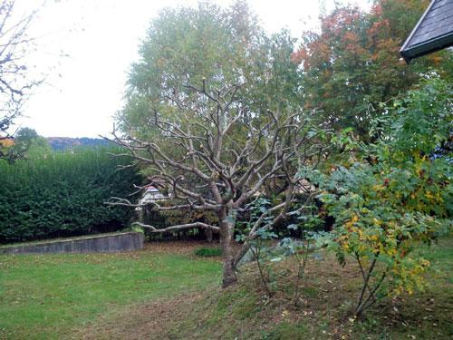 Paysagiste, taille et élagage des arbres